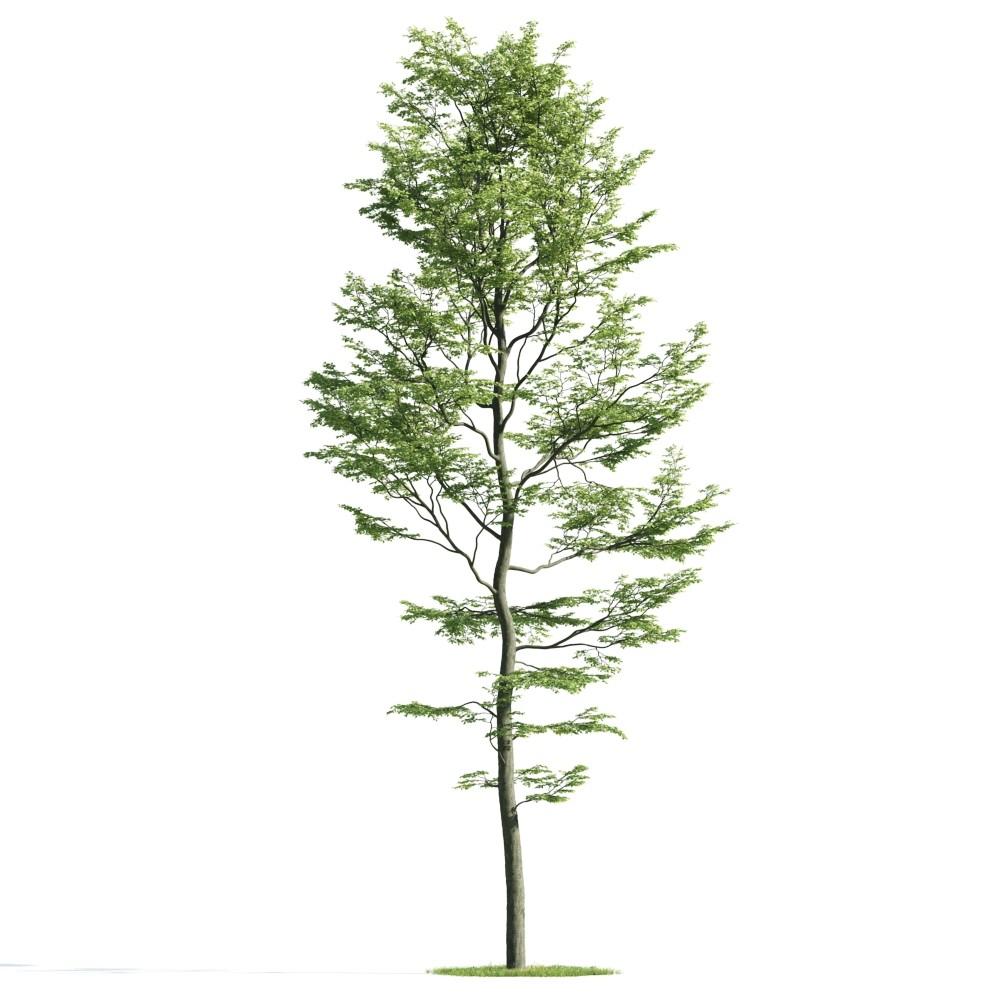Tree 33 am176