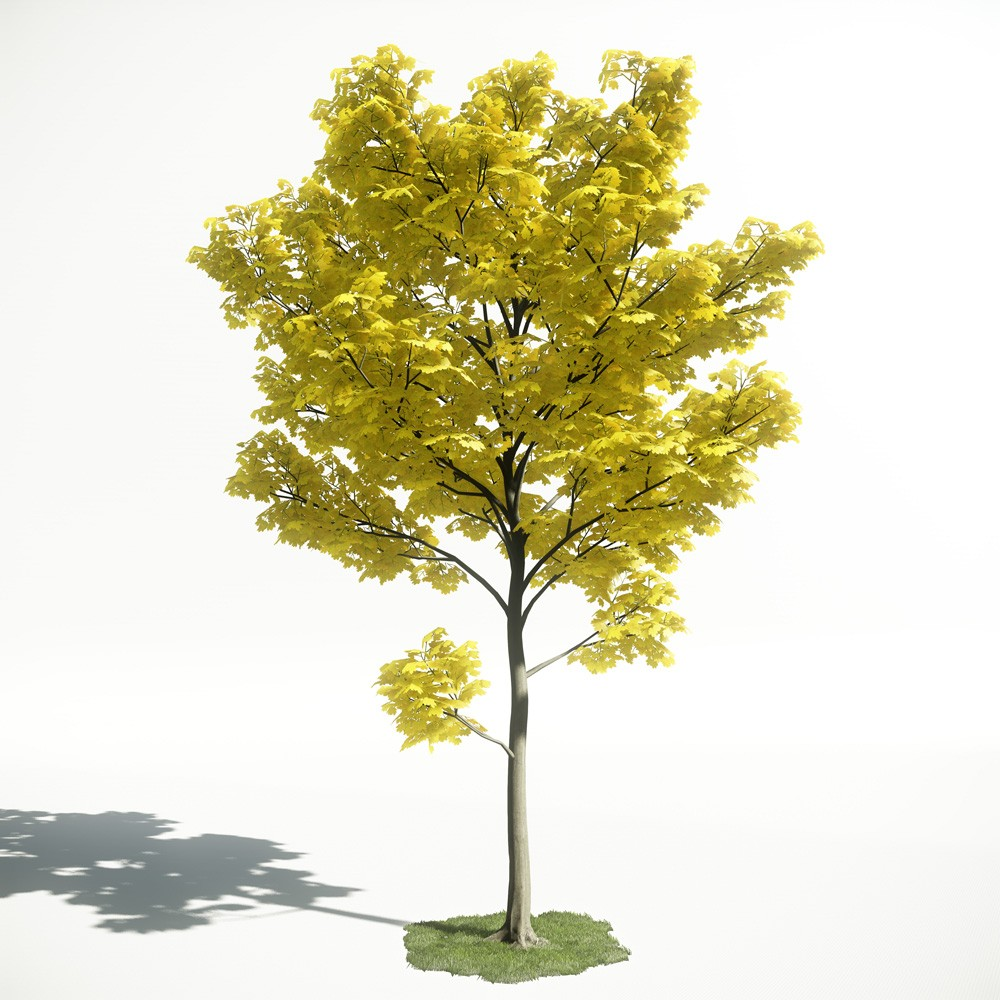 Tree 30 AM1 for CryEngine Archmodels