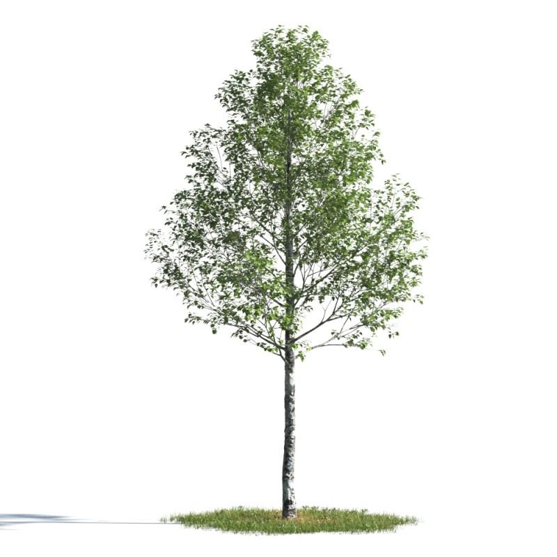 tree 22 AMC1