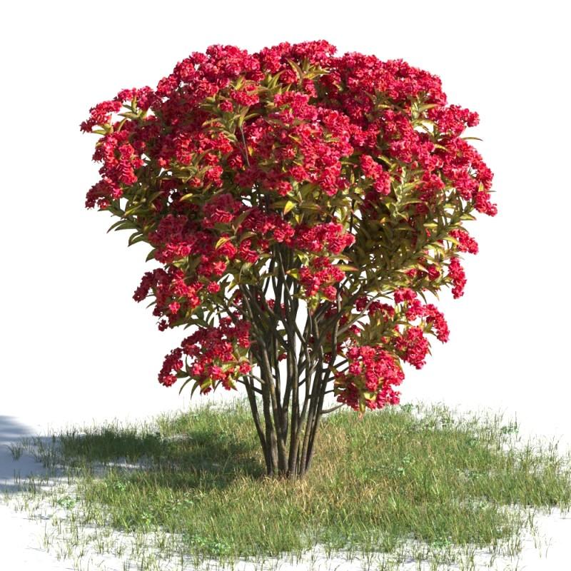 tree 09 AMC01