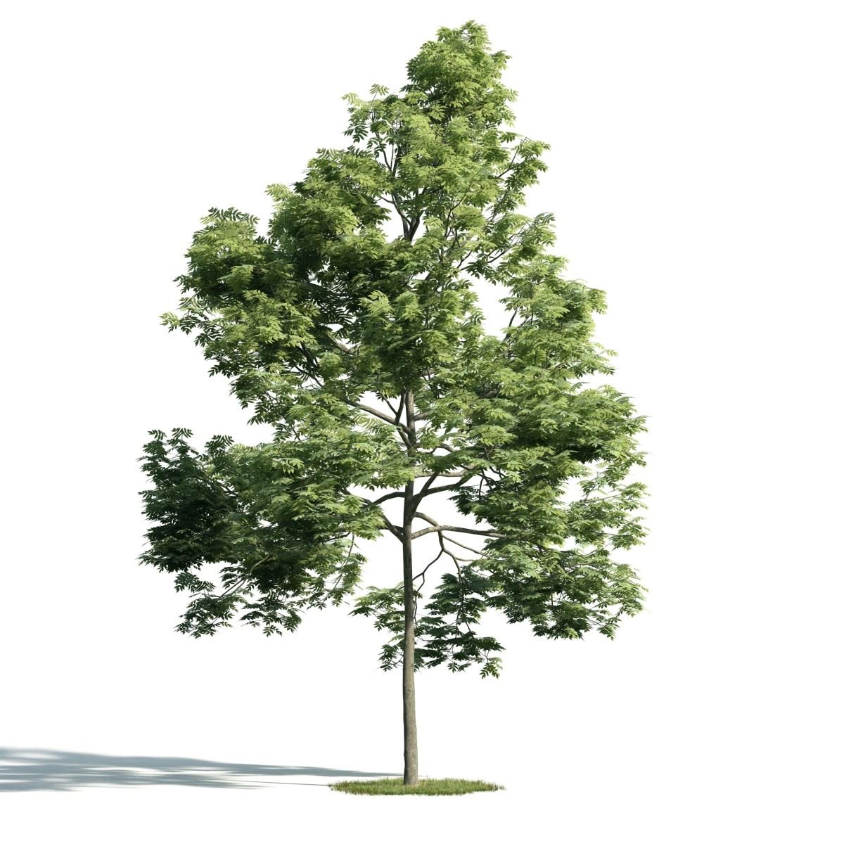 Tree 39 AM171 Archmodels