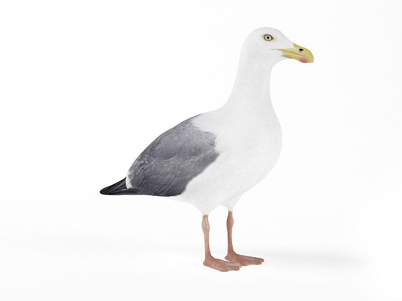 seagull 14 AM83 Archmodels