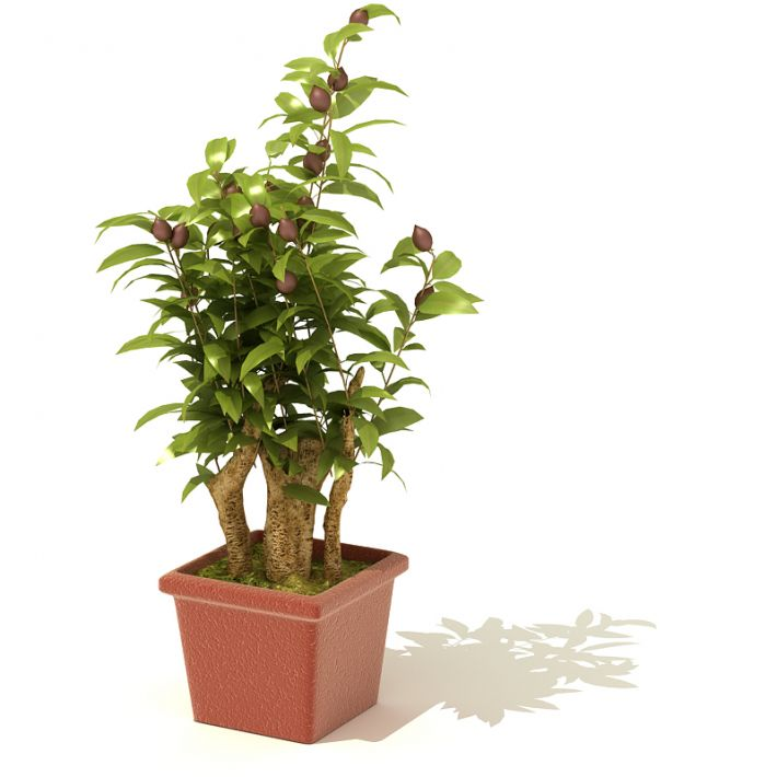 plant 55 AM41 Archmodels