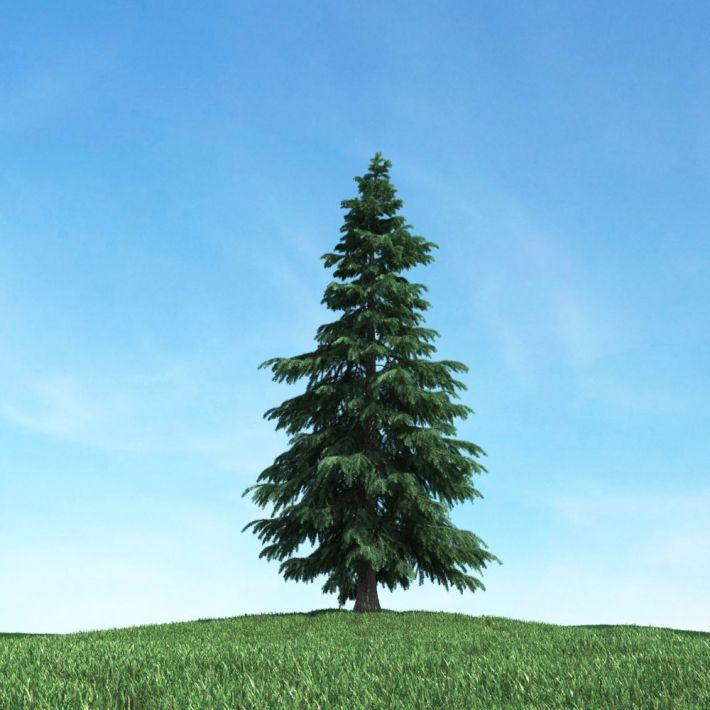 tree 4 AM117 Archmodels