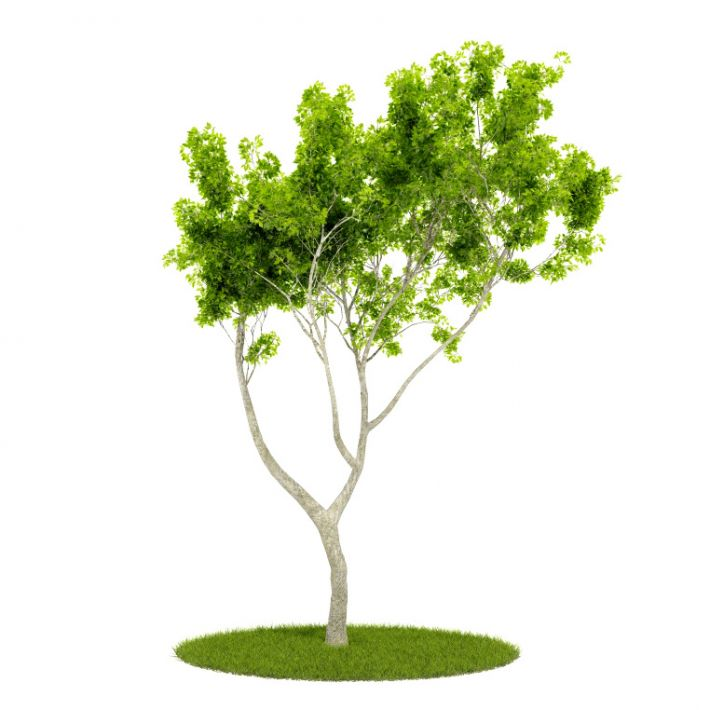 Plant 56 AM52 for Cinema4D Archmodels