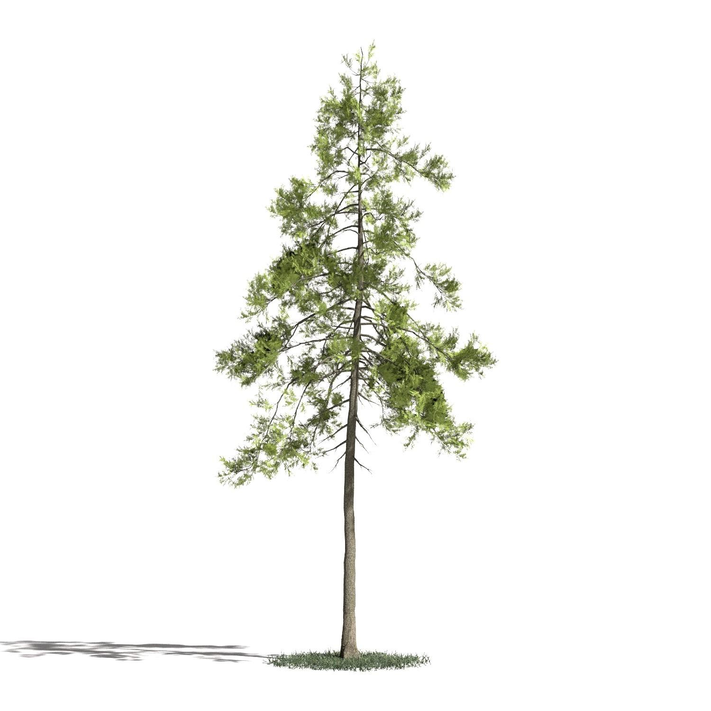Tree 25 AM1 for Blender Archmodels