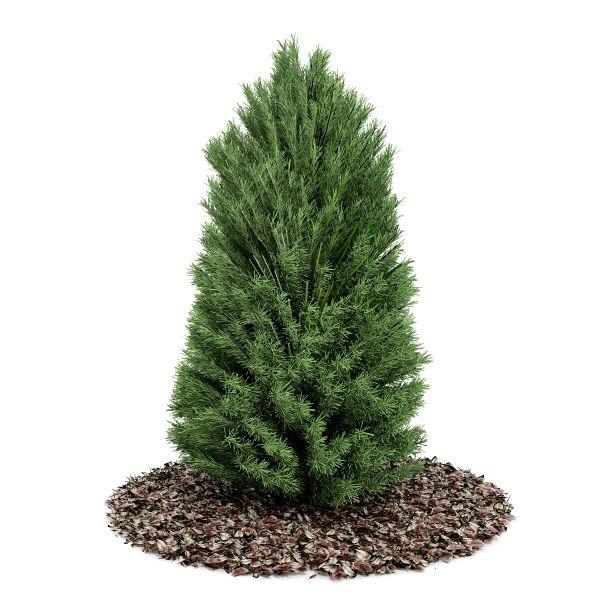 Plant 21 AM52 C4D