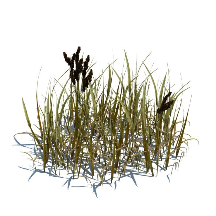 simple grass 69 AM124 Archmodels