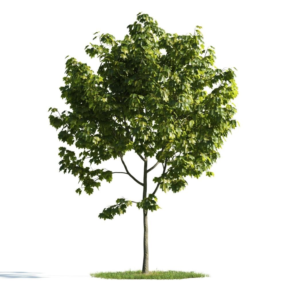 Tree 14 AM176 Archmodels