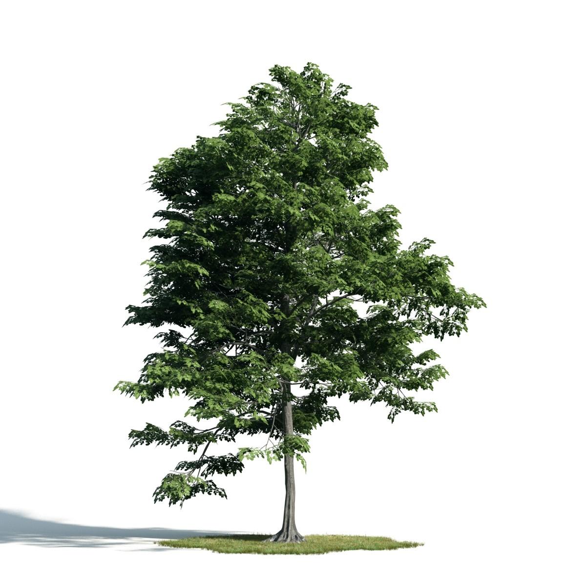 Tree 40 am171