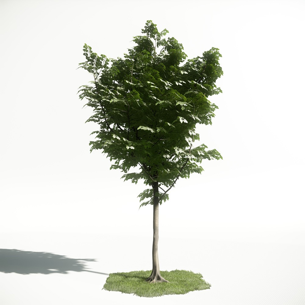 Tree 42 AM1 for CryEngine Archmodels