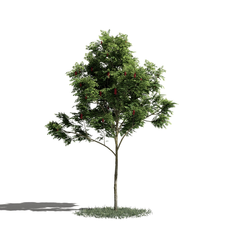 Tree 3 AM1 for Blender Archmodels