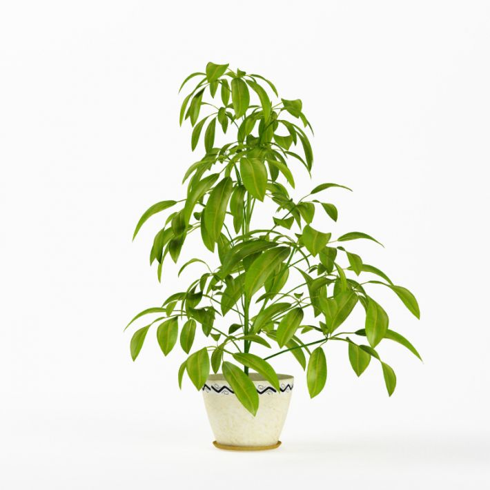 Plant 10 AM75 Archmodels