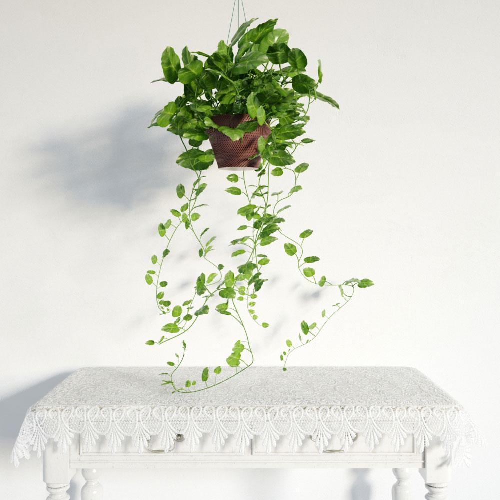 plant 35 am141