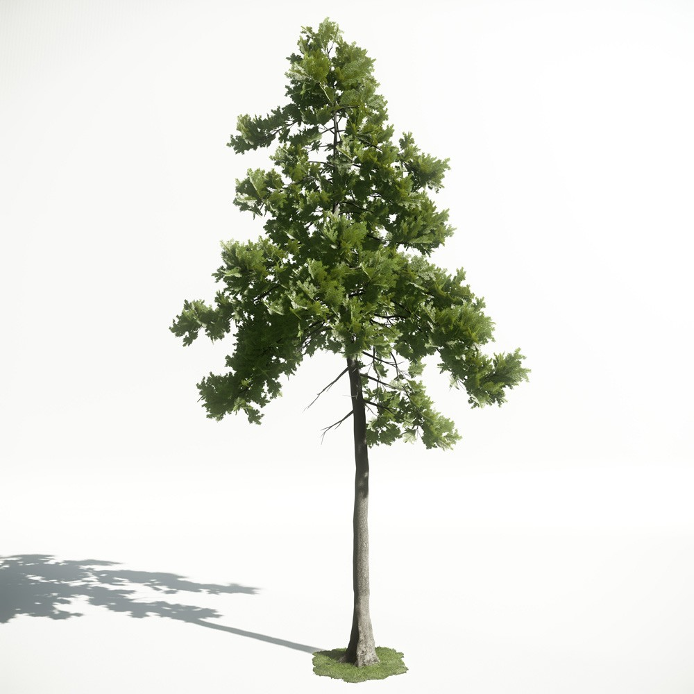 Tree 25 AM1 for CryEngine Archmodels