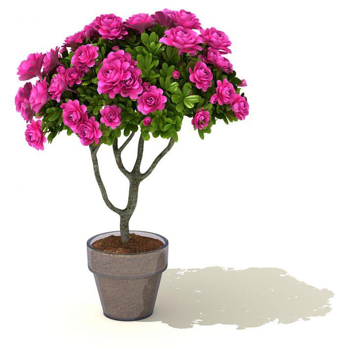 plant 41 AM41 Archmodels