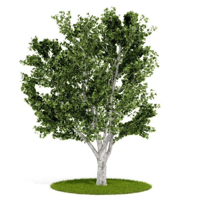 Plant 55 AM52 for Cinema4D Archmodels