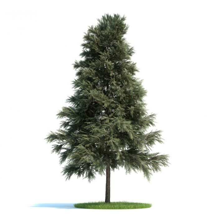 Pinus sylvestris Plant 48 AM58 Archmodels