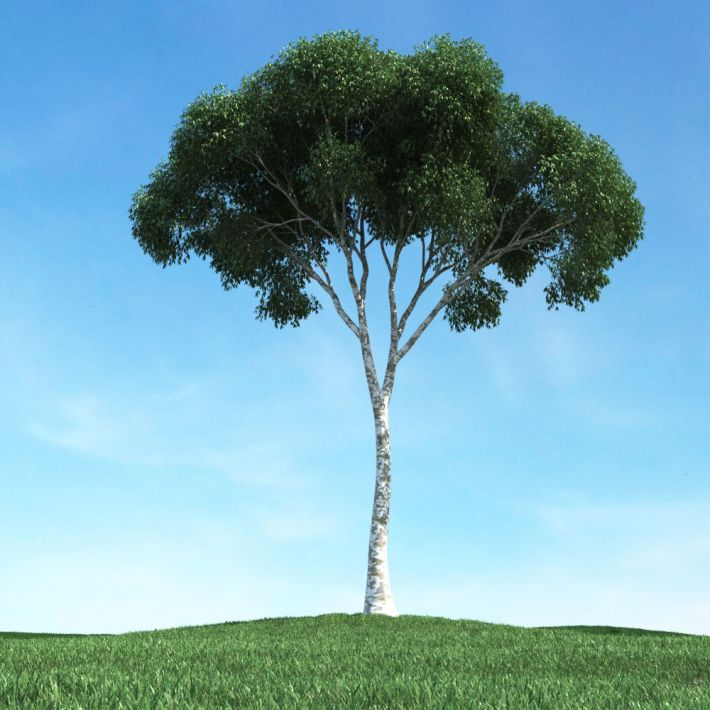 tree 29 AM106 Archmodels