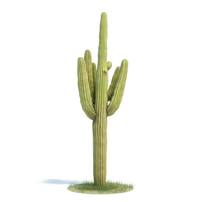 Carnegiea gigantea Plant 55 AM61 Archmodels