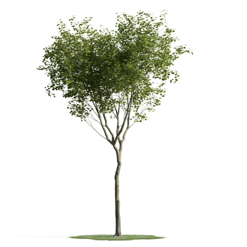 tree 20 AM163 Archmodels