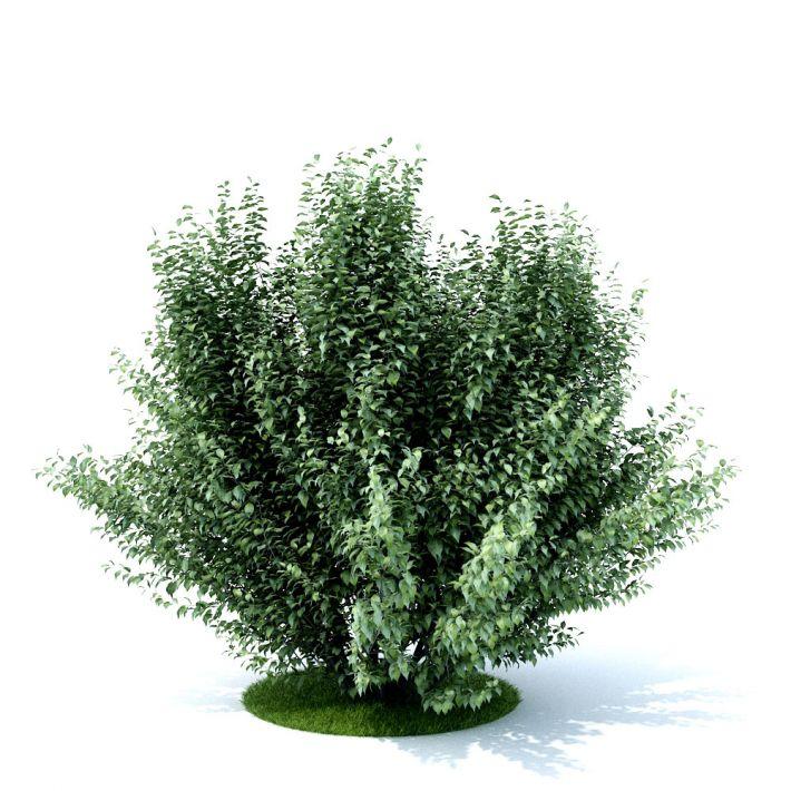 plant 30 AM105 Archmodels