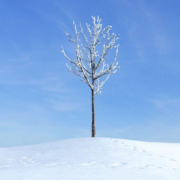 linden tree 11 AM100 Archmodels
