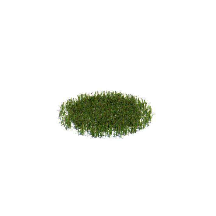 simple grass medium 11 AM126 Archmodels