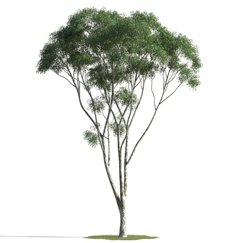 tree 47 AMC01