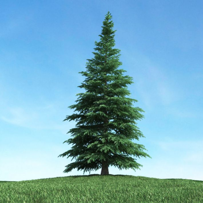 tree 11 AM117 Archmodels