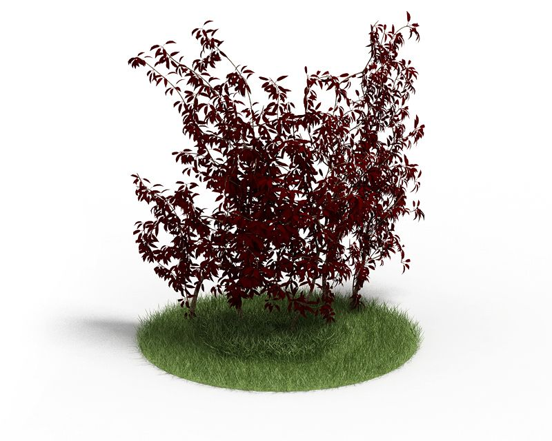 Plant 42 AM4 for Cinema4D Archmodels