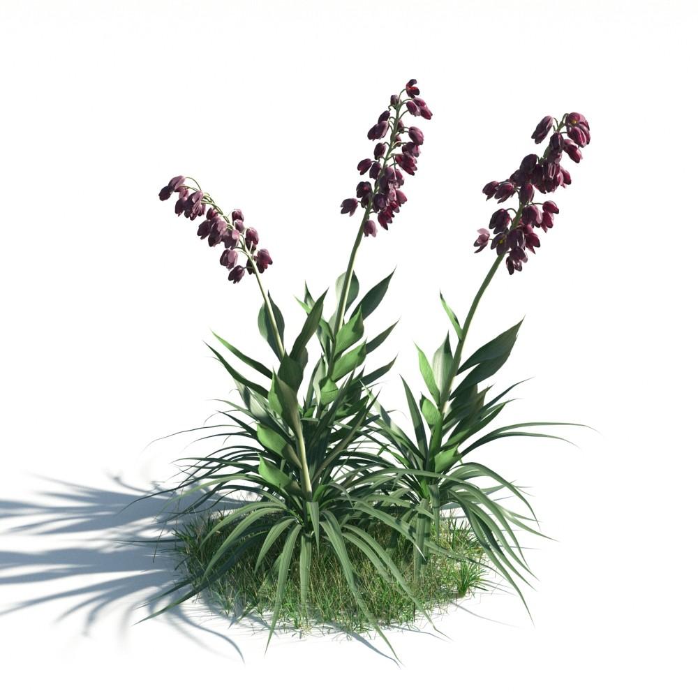 plant 19 AM183
