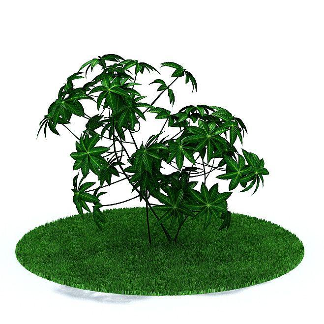 Plant 24 AM31 Archmodels