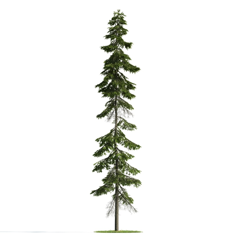 Tree 41 AM176 Archmodels