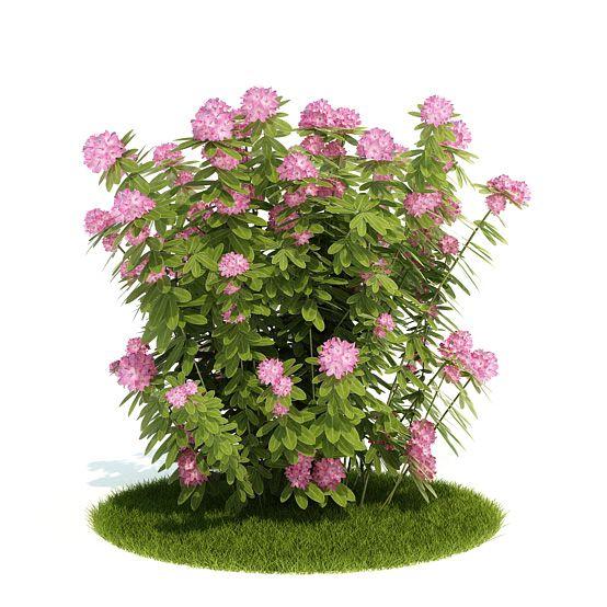 Plant 19 AM52 Archmodels