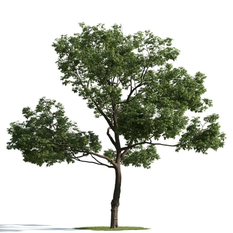tree 49 AM163 Archmodels
