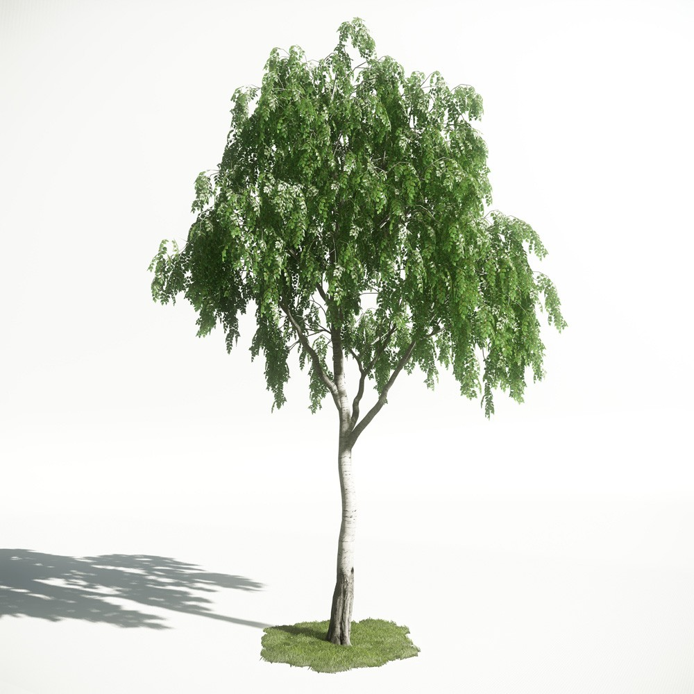 Tree 16 AM1 for CryEngine Archmodels