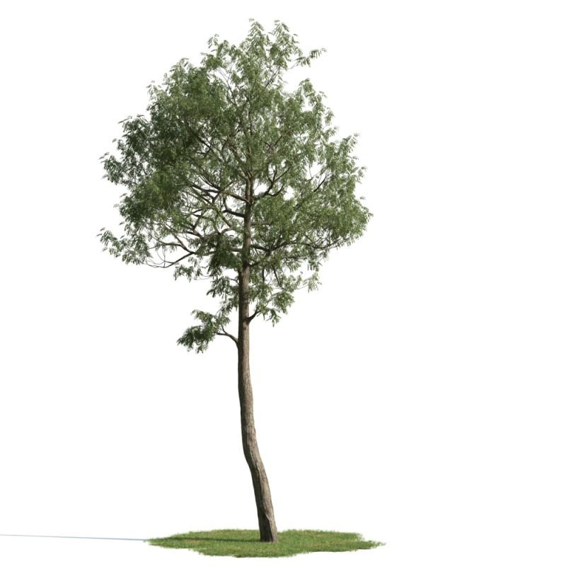 tree 47 AM163 Archmodels