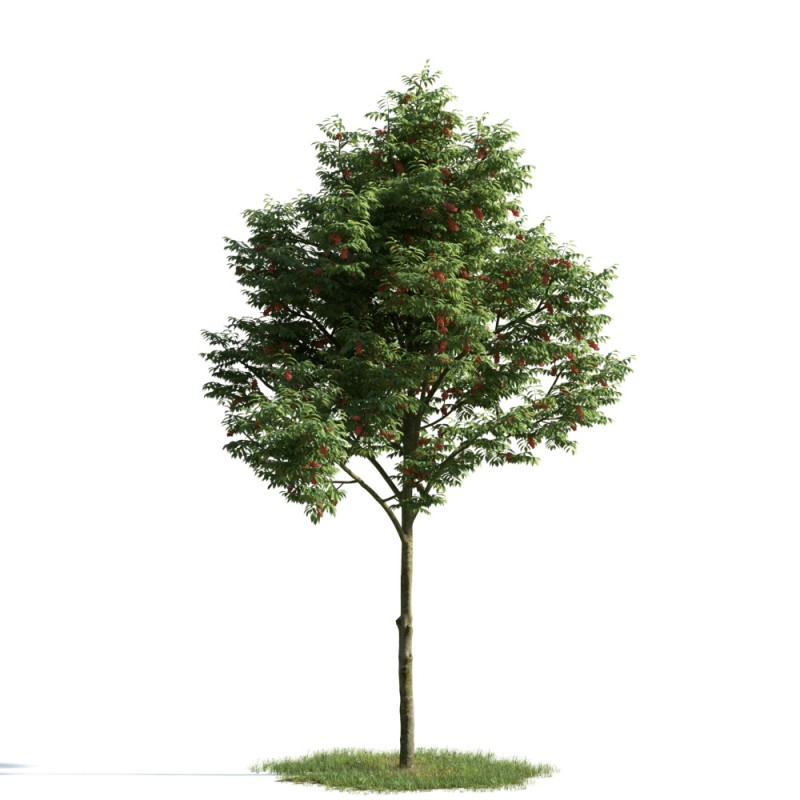 tree 3 AM163 Archmodels