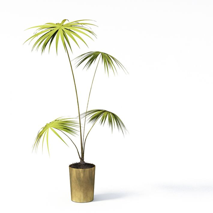 Plant 9 AM24 Archmodels