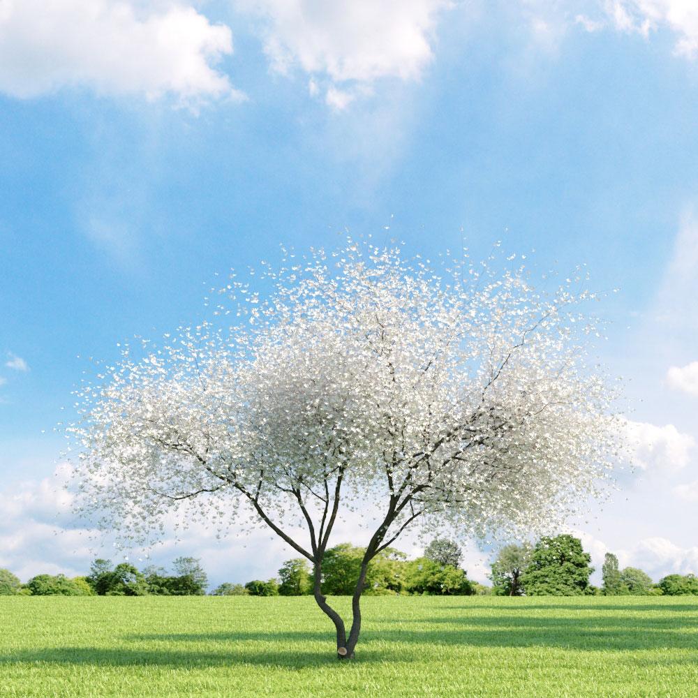 Magnolia 032_v3 AM136