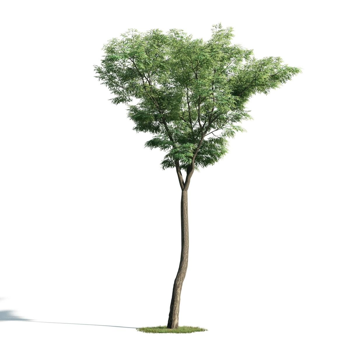 Tree 46 am171