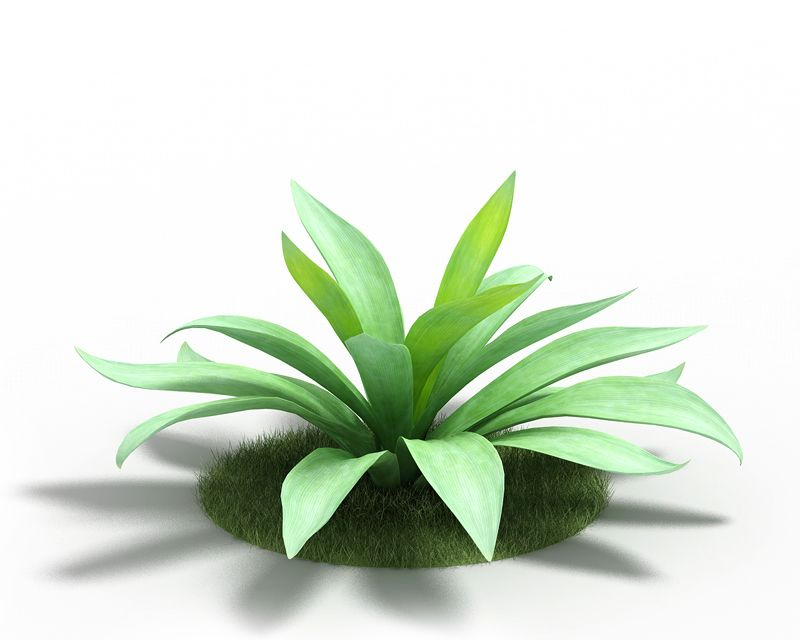 Agave 1 AM3 for Cinema4D Archmodels