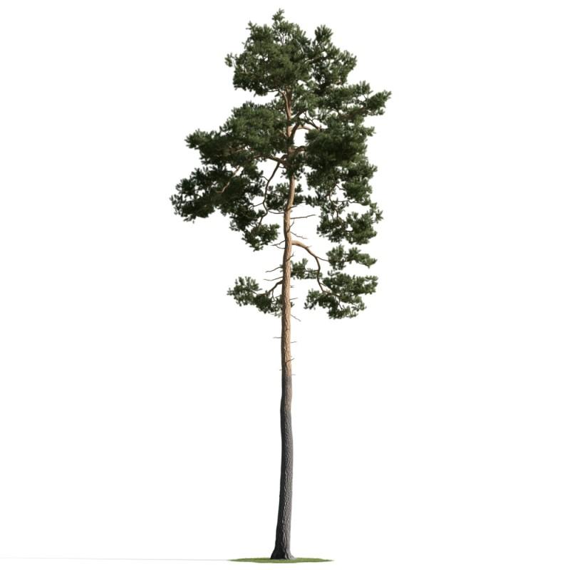 tree 45 AM163 Archmodels