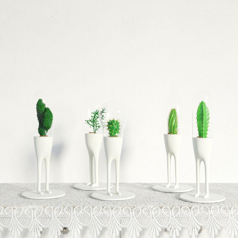 plant 24 am141
