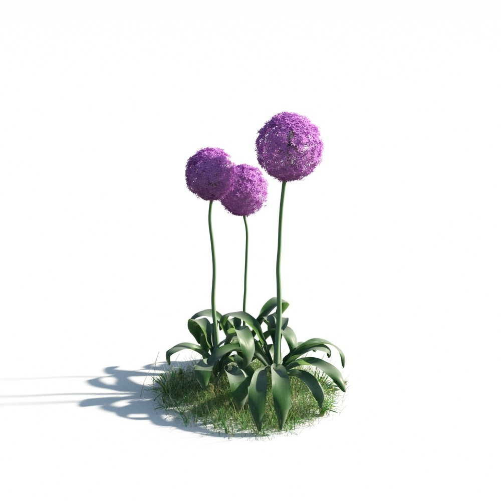 plant 03 AM183