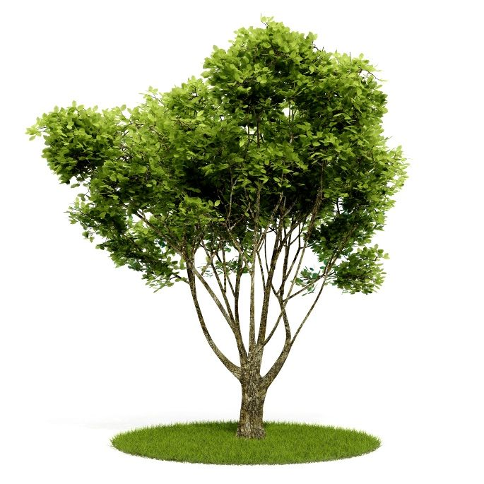 Plant 11 AM52 for Cinema4D Archmodels