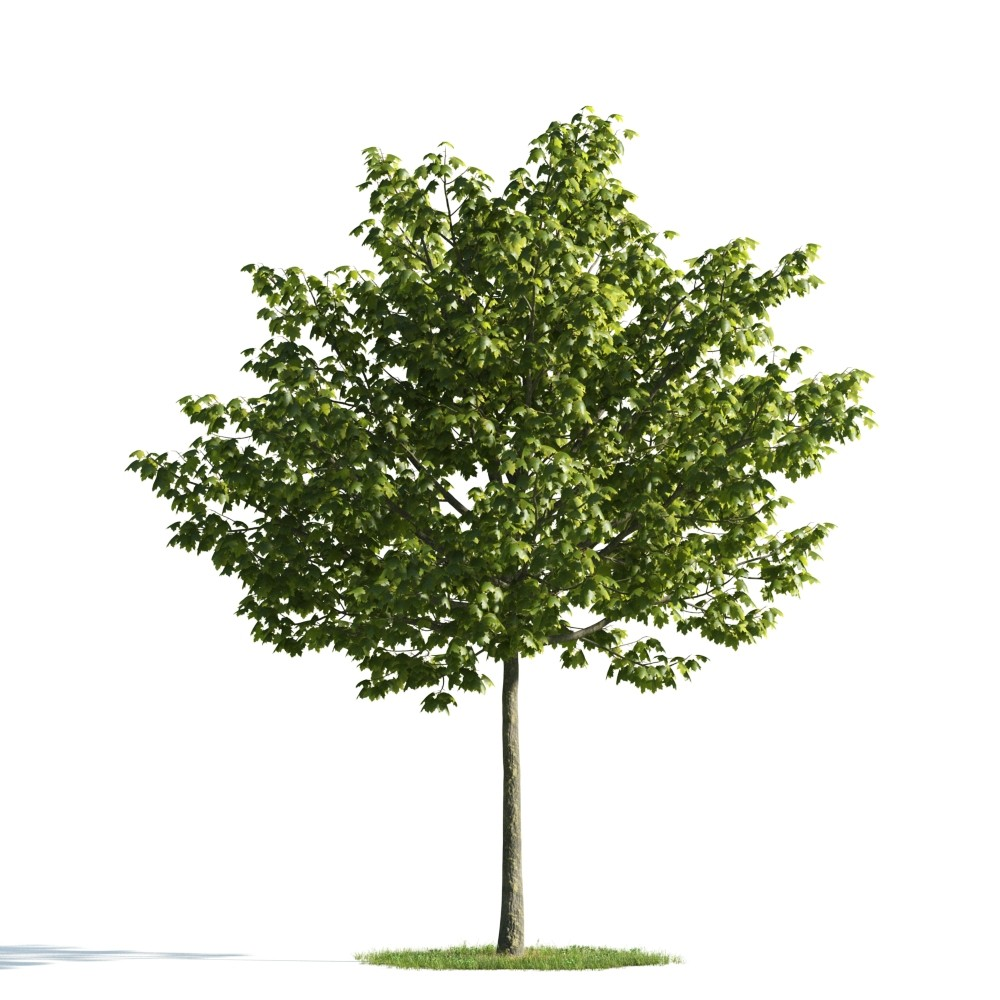 Tree 16 AM176 Archmodels