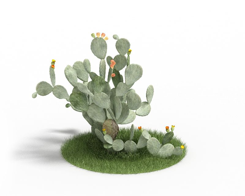 Opuntia ficus indica 54 AM3 for Cinema4D Archmodels
