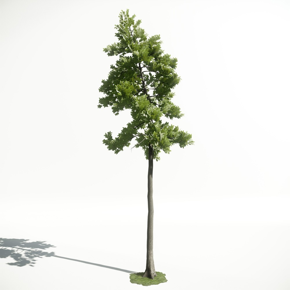 Tree 27 AM1 for CryEngine Archmodels